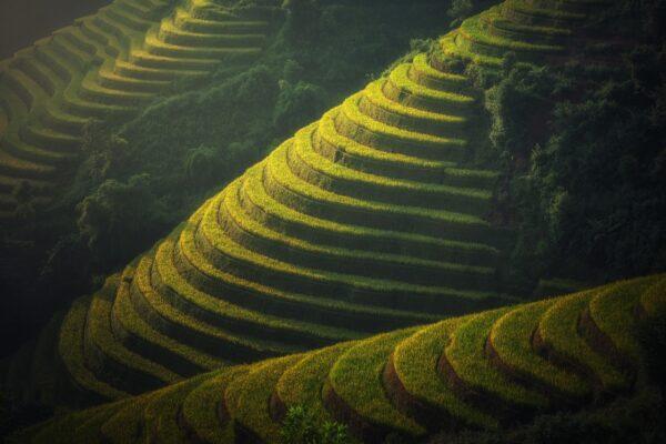agriculture Viêtnam